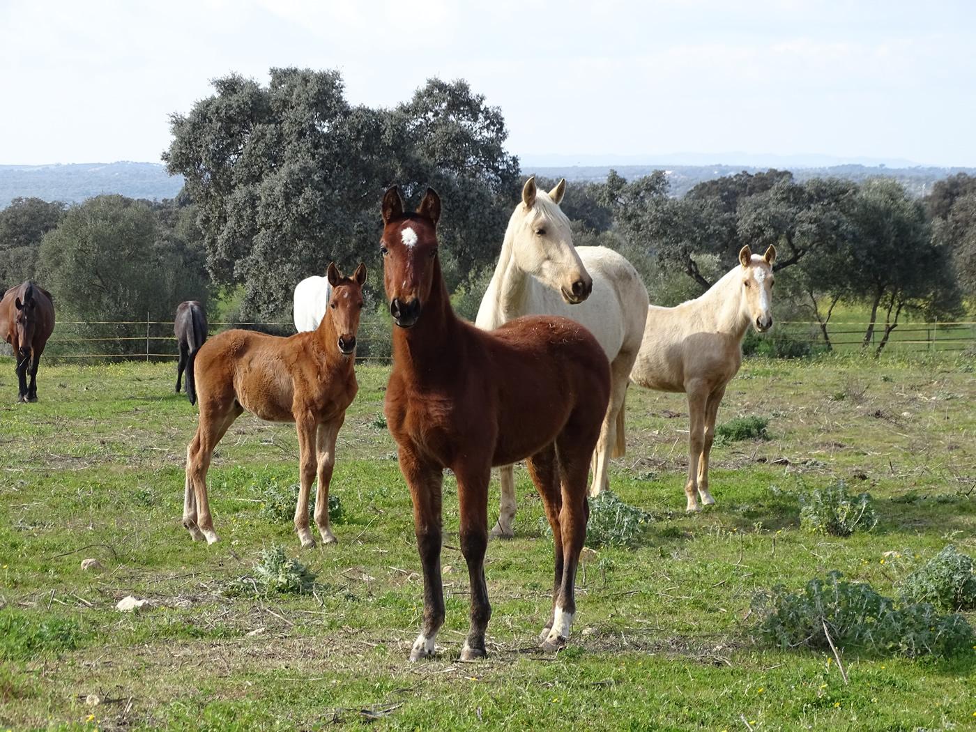 horse caballo (7)